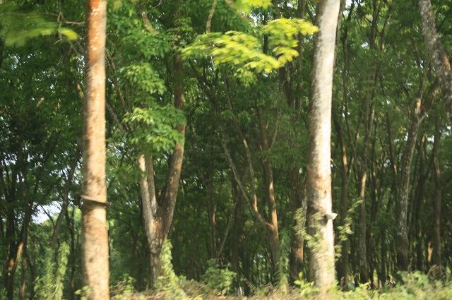竹林大象的风景