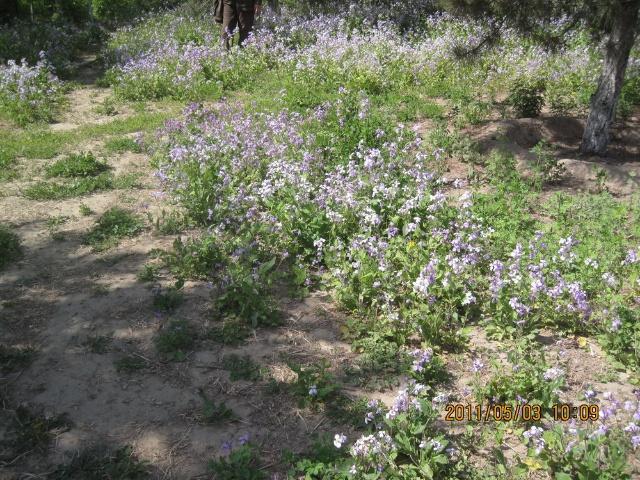五月的鲜花开遍了原野 奥森公园的五月花
