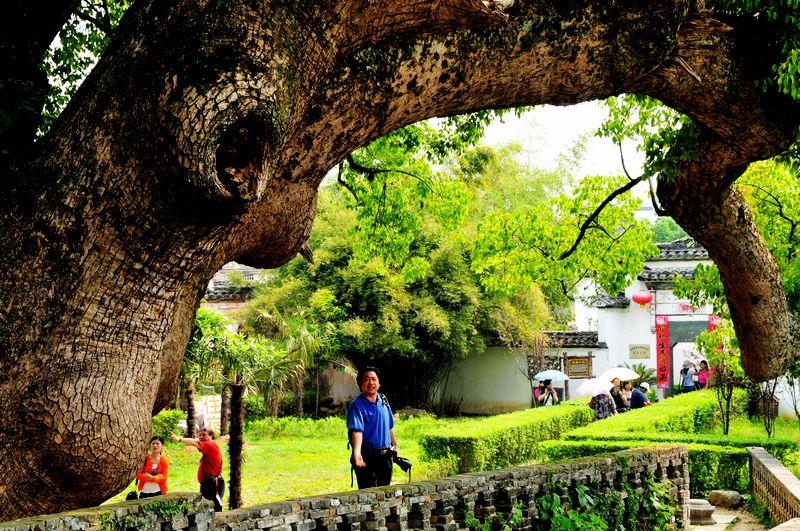 中国寿命最长的树_
