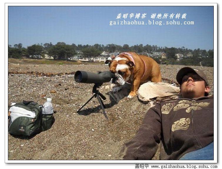 《开心一刻》动物搞笑图片集