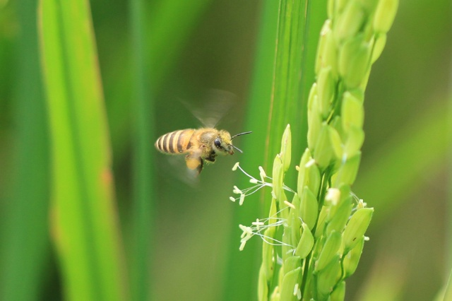 稻田里还有啥