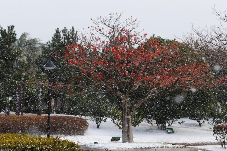 关于春节的手工树步骤