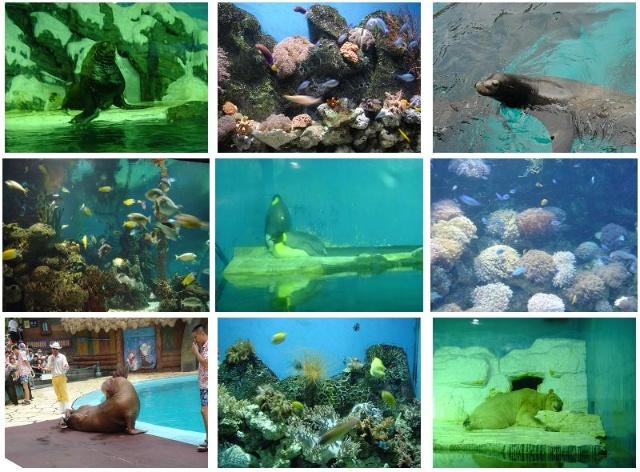 另外,还有可爱的动物们,这才是海洋公园里的主角嘛