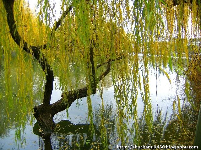 柳树春夏秋冬的图片