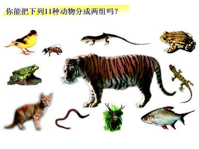 生物的分类