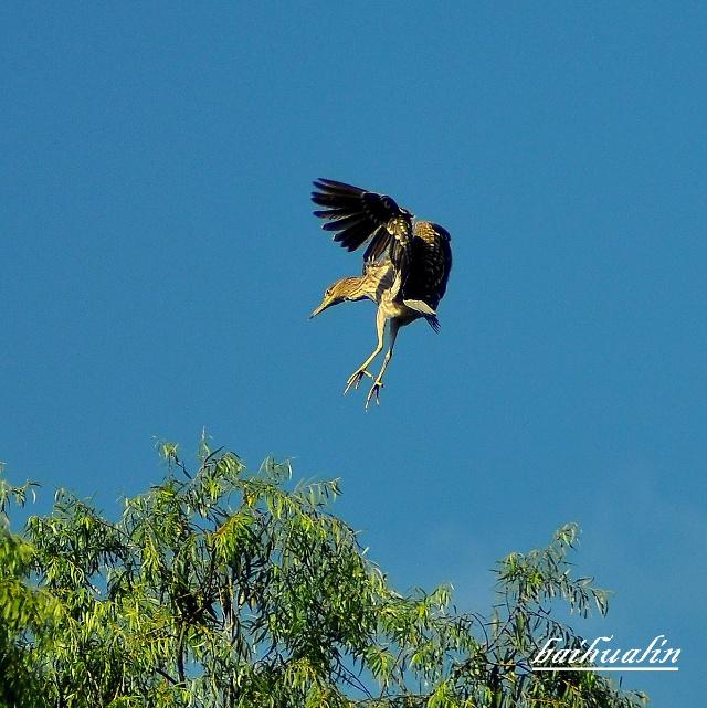 有一天,老鹰抓小鸡,小鸡堆老鹰说了一句话,老鹰突然从