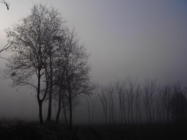 萧条的杨柳树脚下,结冰的河床与之为伴,寒风中,哆哆嗦嗦的芦缨,强打着