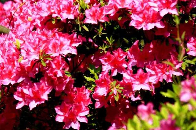 上,各种叫得出名字和叫不出名字的花卉、草木,纷纷绽放着美丽的花