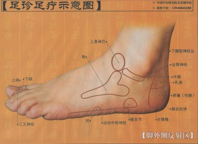 左脚底部反射区图