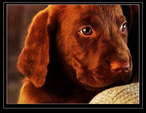 最近收集了一些可爱的动物图片