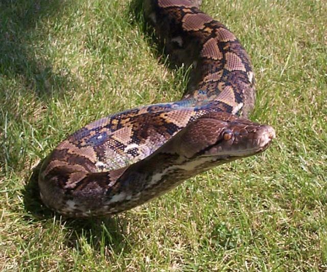 怎样区别蛇和无脚蜥蜴(转载的)-动物的心我懂-搜狐