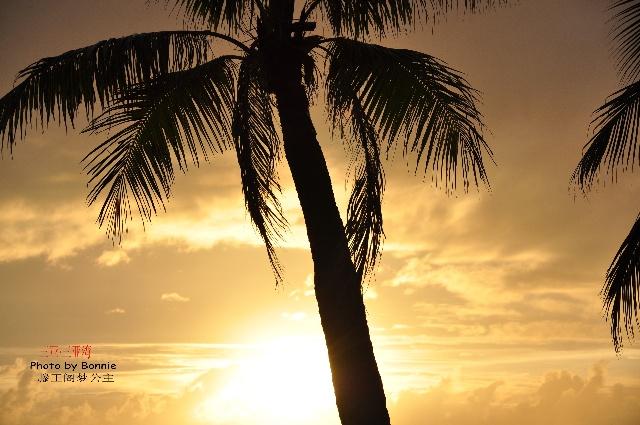 夕阳下的椰树也显得格外风情万种
