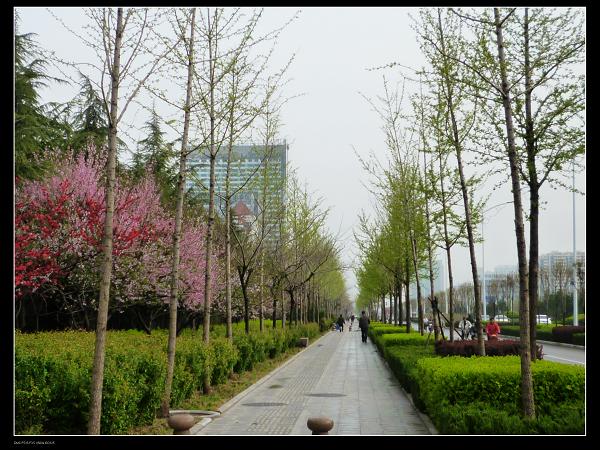 道路的两侧遍植银杏树和合欢树,设大面积绿地及园艺花卉,可以毫不夸张