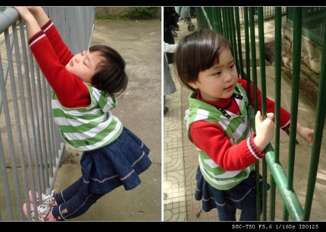 英语宝贝的动物园