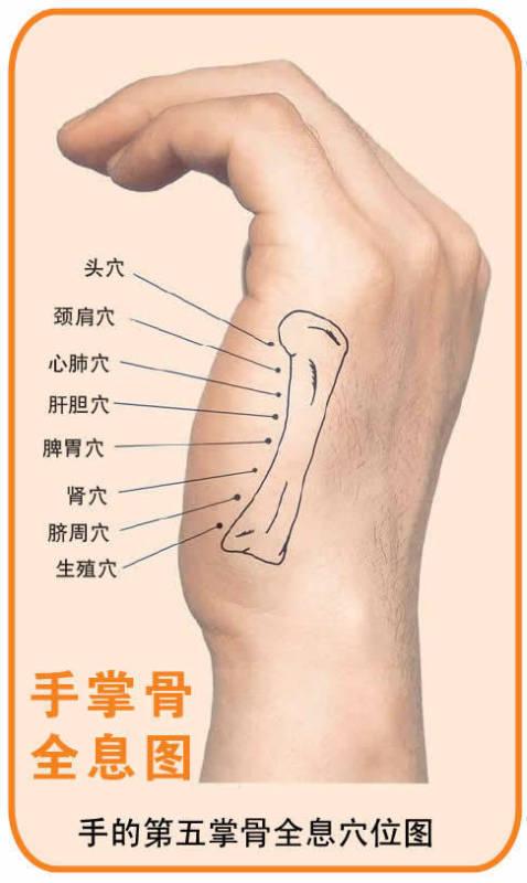 人体全息图解(面诊,手诊)