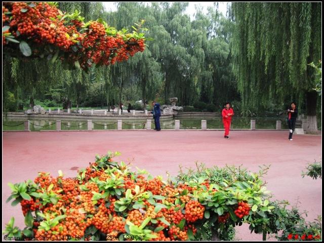 深秋的济南百花公园