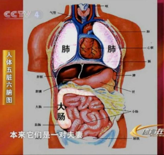身体心肝部位图解