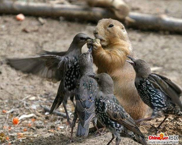 松鼠吃坚果-动物给力的功夫pk赛