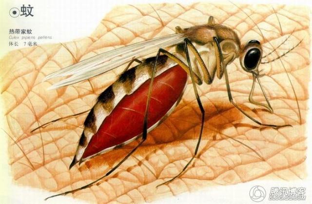 科学家通过电子显微镜研究发现,蚊子是通过触角上的感觉毛感受到