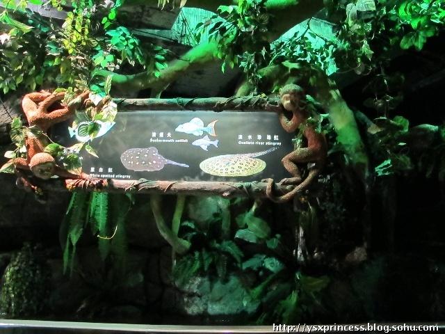 这里就是长风海洋世界最新打造的新景区------热带雨林.