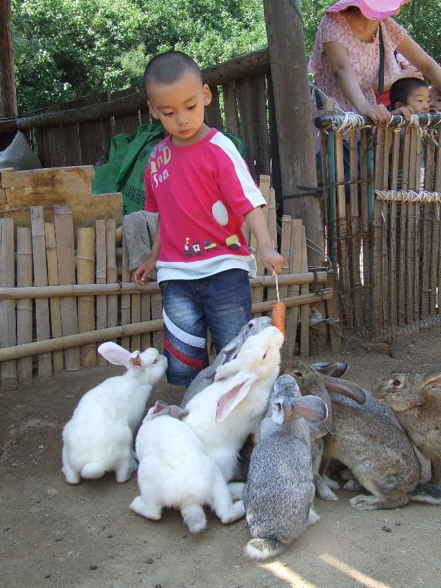动物园里五只小兔子图片