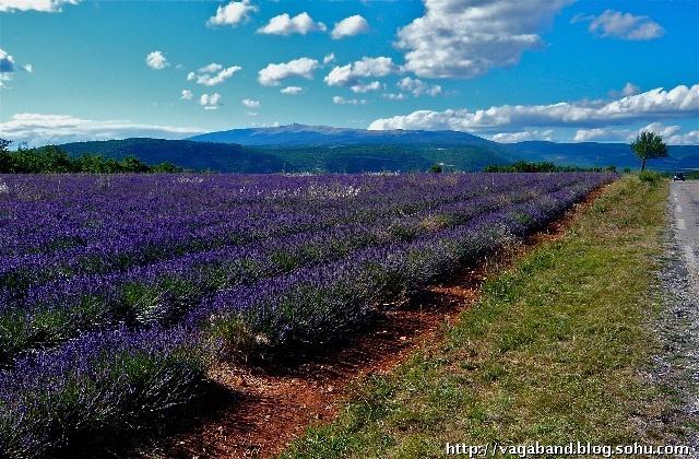 法國普羅旺斯(Provence)是舉世公認的薰衣草之鄉,而小村索爾特(Sault)則被譽為普羅旺斯的薰衣草之都。當汽車沿著山區公路穿行,逐漸接近索爾特時,一片片紫色的薰衣草田野不斷映入眼簾,興奮的心情也隨之高漲到極點。以前只在公園里見過小型薰衣草花圃,如此廣袤的花田還是第一次看到,比我想像的景色更加壯美,要不是從車窗外飄來一陣香氣,真以為是在夢中。來到一片茂盛的薰衣草田邊,競相開放的花枝隨風搖曳,把自然清新的幽香彌漫在明澈的空氣之中,用手輕輕地拂動長長的花序,渾身就會立即沾染上淡雅的馨香,一種微醉微熏的感
