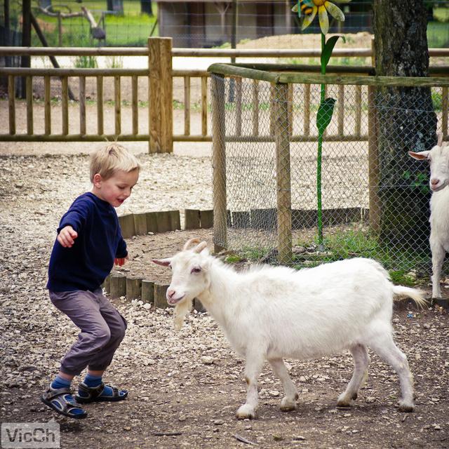 特别喜欢这张,可爱的小男孩,可爱的小山羊.抓拍的好.