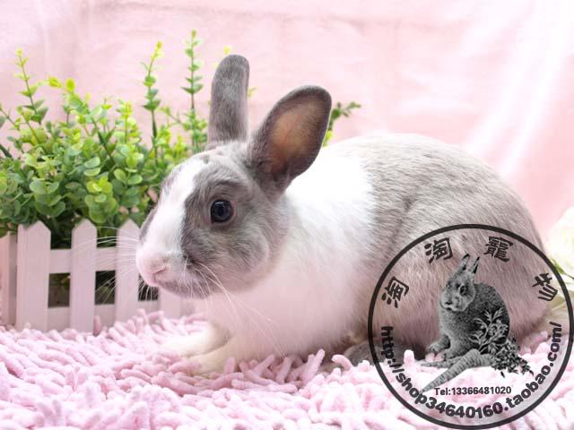 大眼睛兔子图片大全可爱