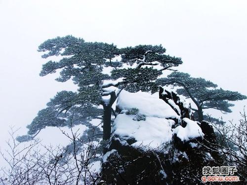 壁纸 风景 树 松 松树 500_375