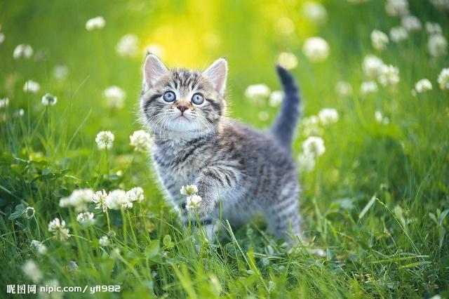 我非常喜欢小猫咪,它很可爱.