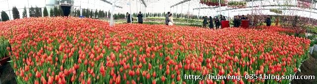 壁纸 成片种植 风景 花 植物 种植基地 桌面 640_171