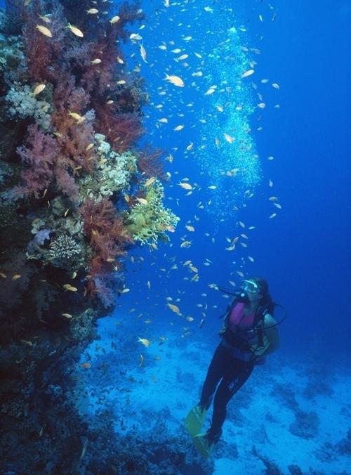 bohol island (薄荷岛)—— 小清新的海岛之恋-nanhu